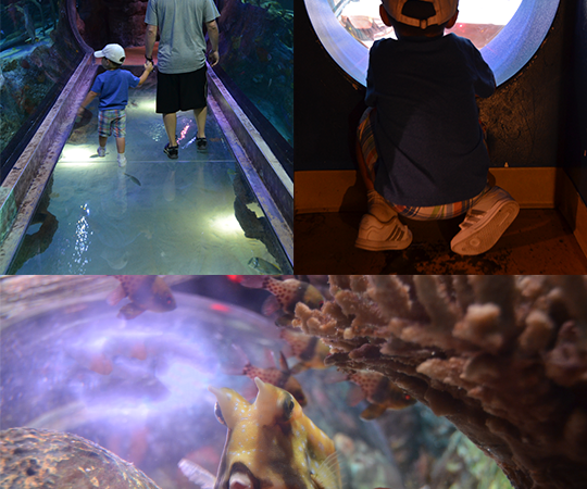 A Trip to SEA LIFE Aquarium