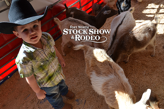 Visiting The Stock Show