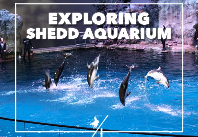 Explore Shedd Aquarium