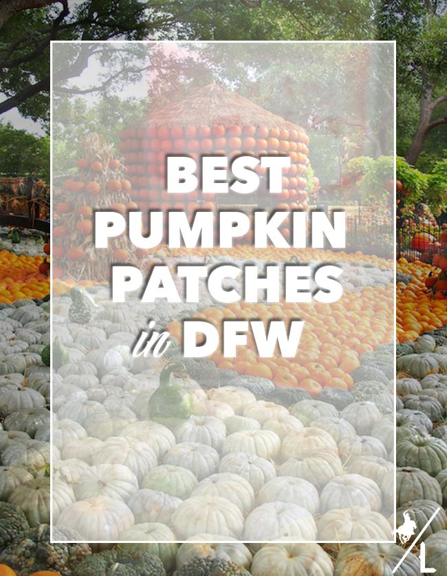 Best Pumpkin Patches in DFW