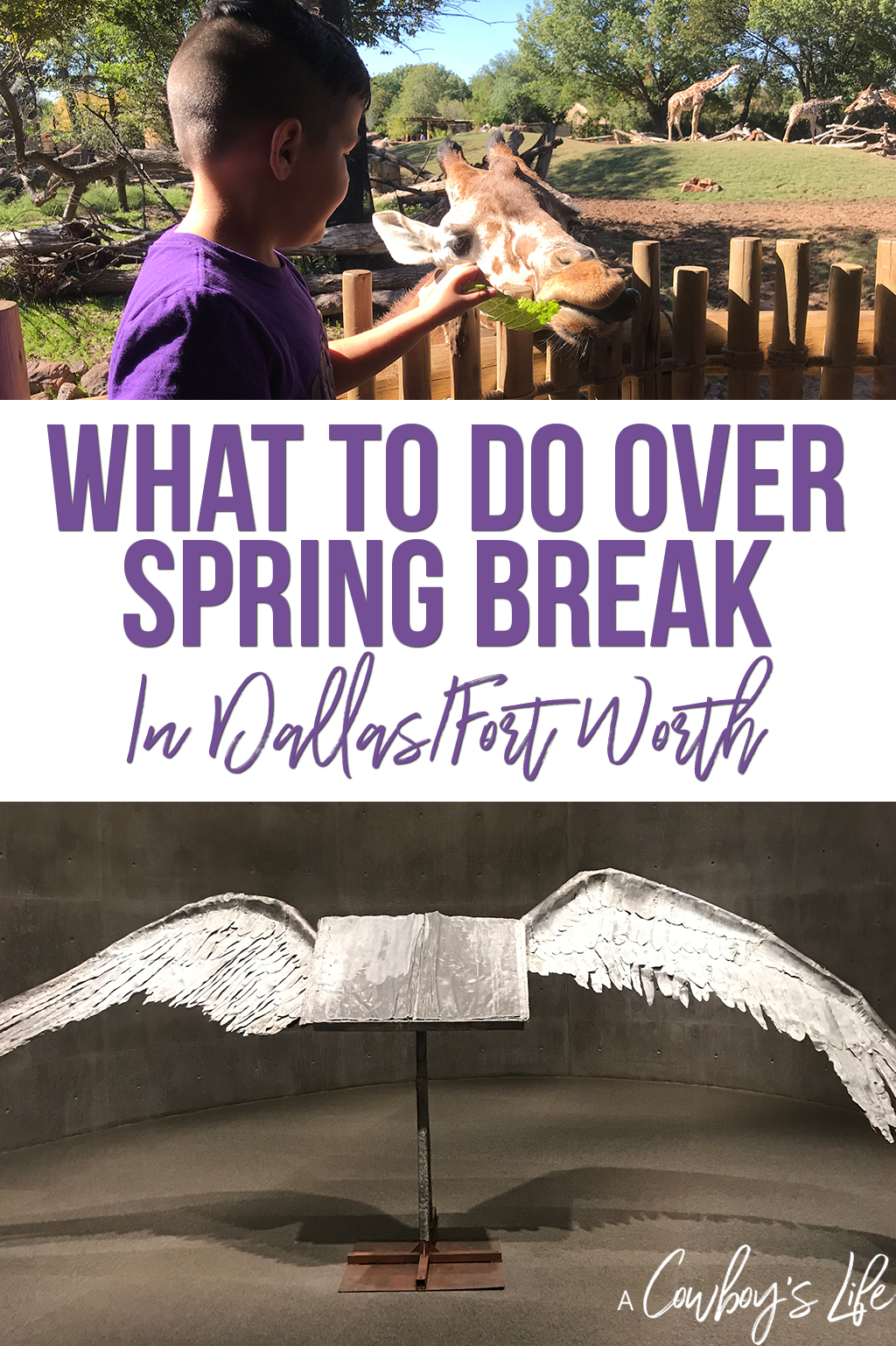 Things to do in DFW over spring break #texas #traveltexas