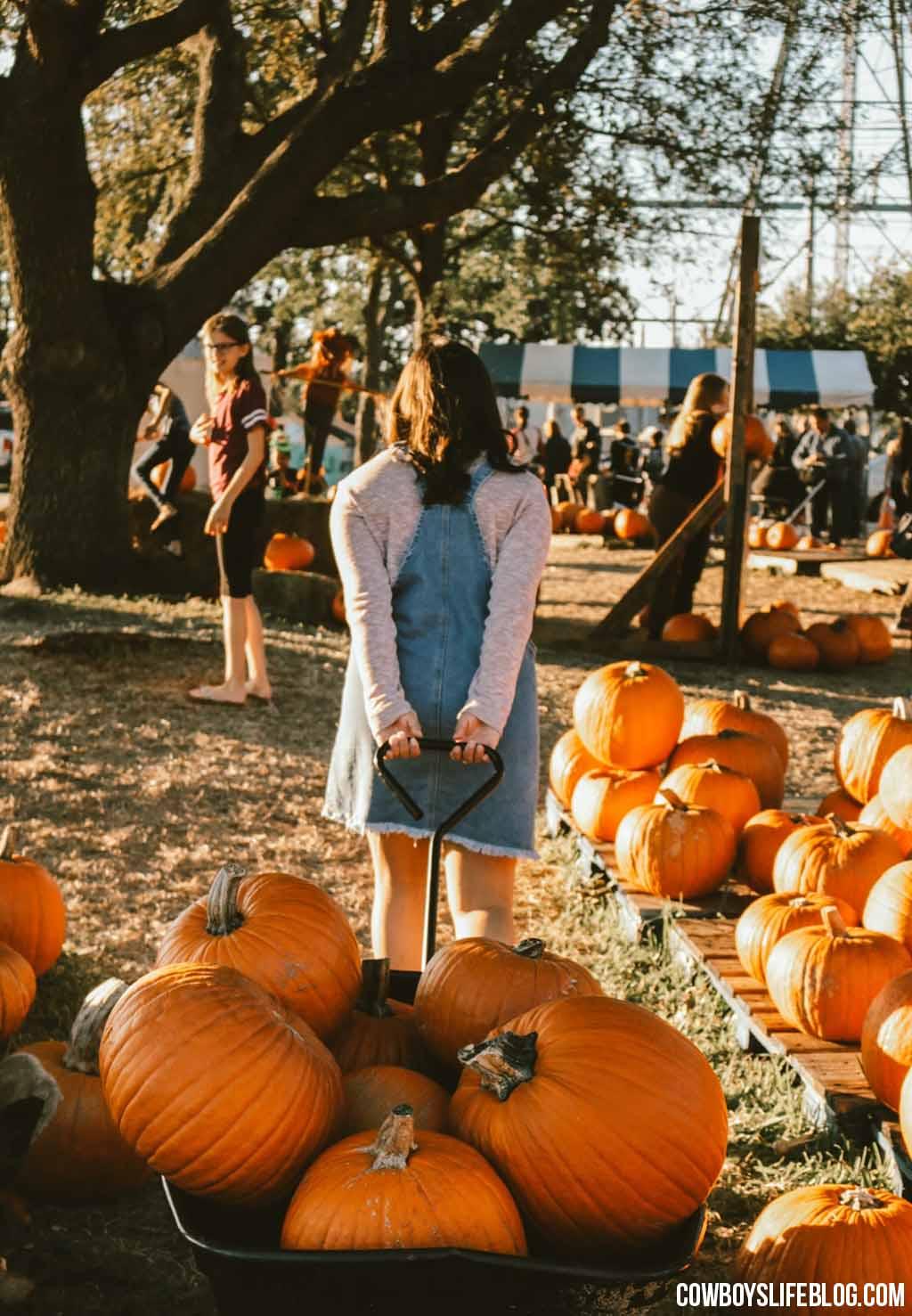 The Best Pumpkin Patches in DFW (2021)