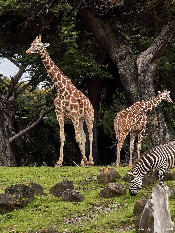 The Best Zoos in Texas
