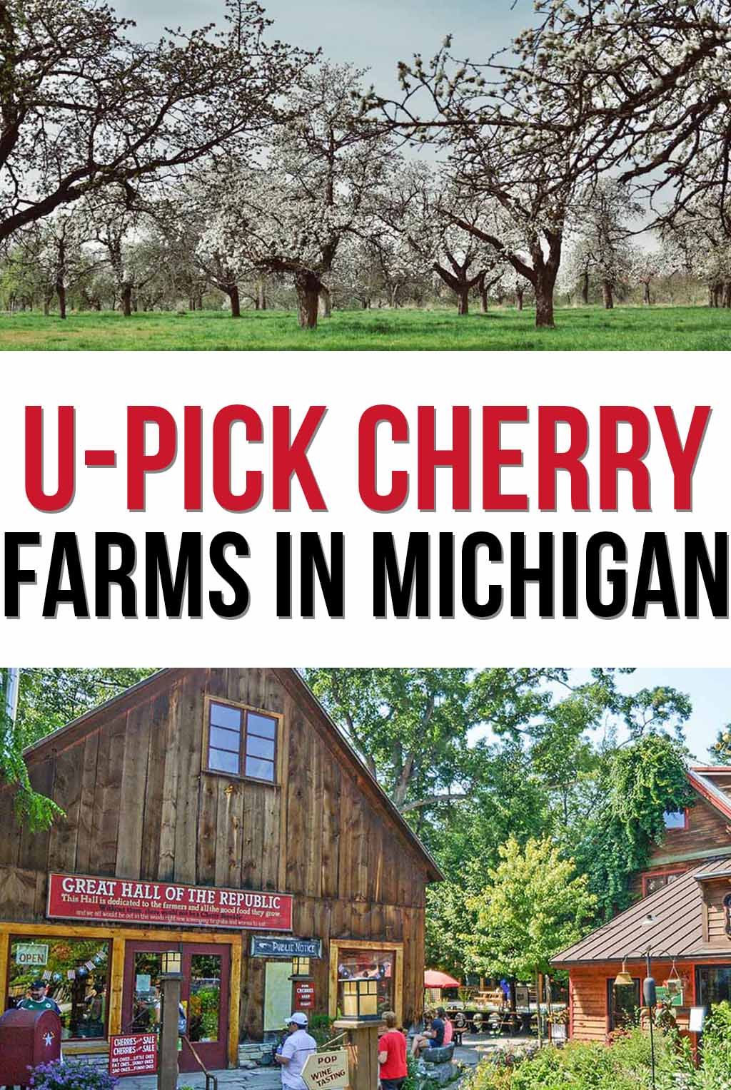 The Best Cherry Picking in Michigan