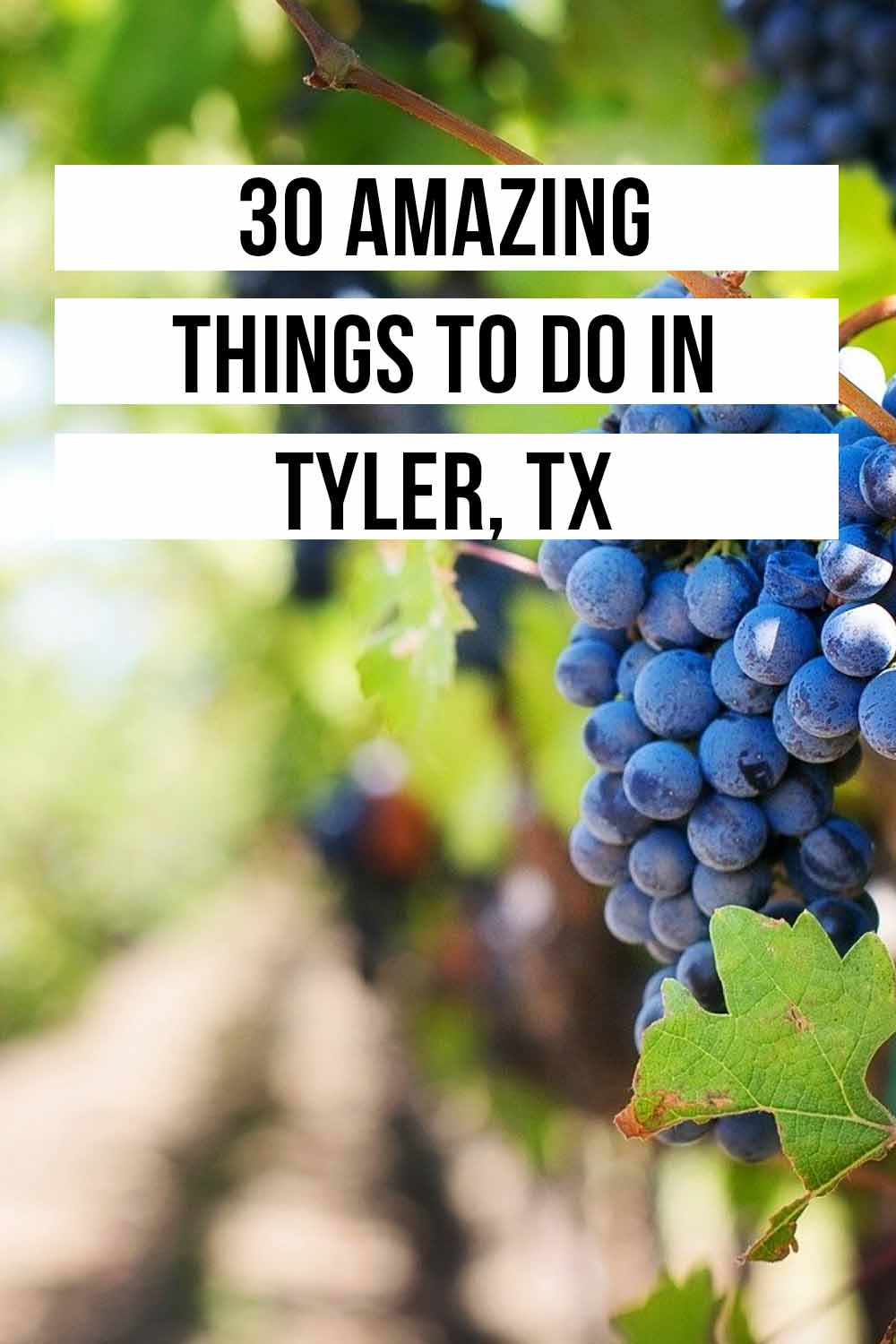 Things to do in Tyler, TX