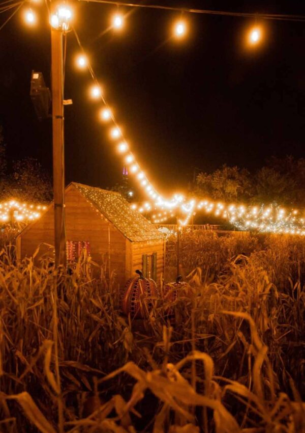 The Best Pumpkin Patches in Houston (2021)