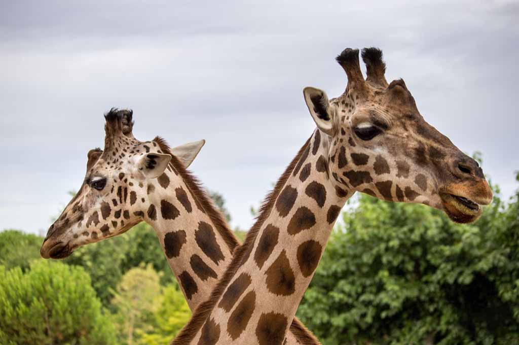 The Best Zoos in Florida