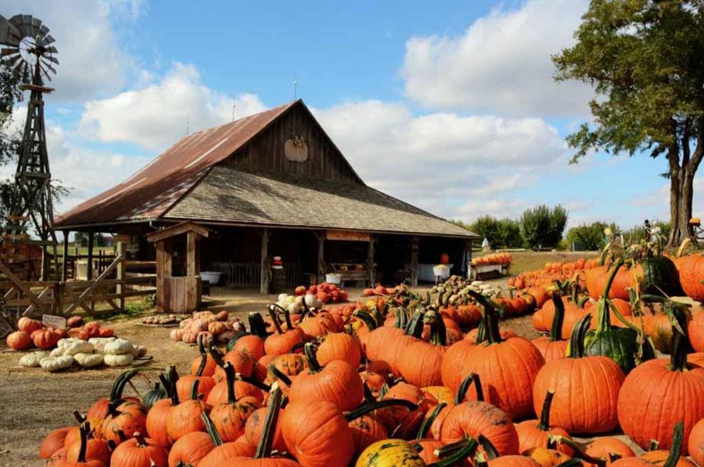 The Best Pumpkin Patches in San Antonio