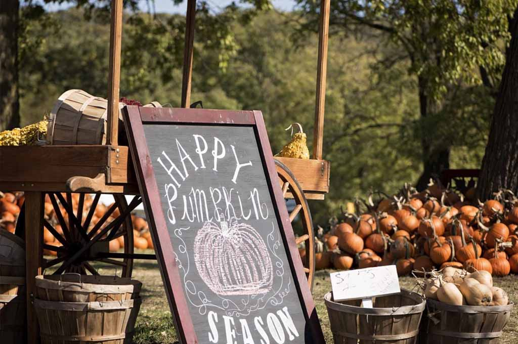 The Best Pumpkin Patches in Houston