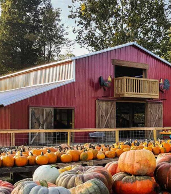 The Best Pumpkin Patches in Arkansas (2021)