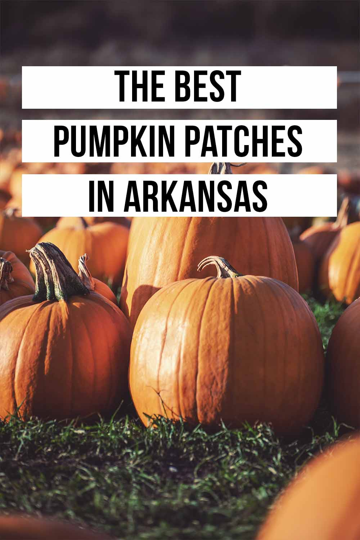 The Best Pumpkin Patches in Arkansas